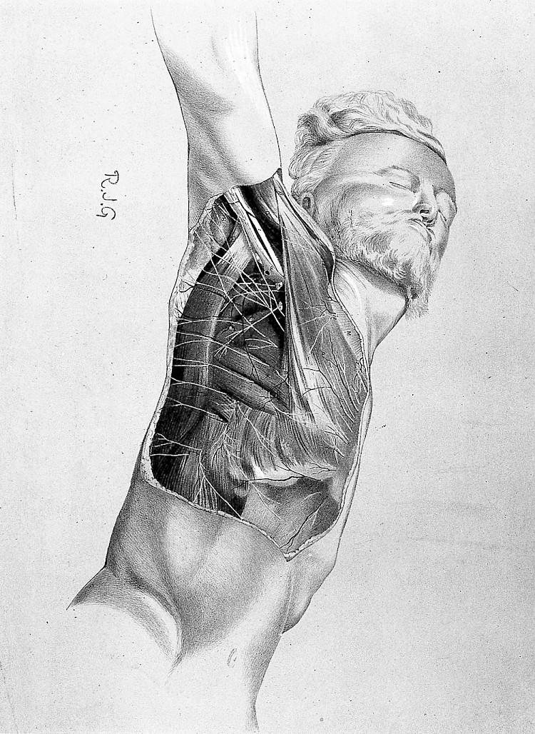 Anatomy For The Artist Visual Arts Katonah Art Center